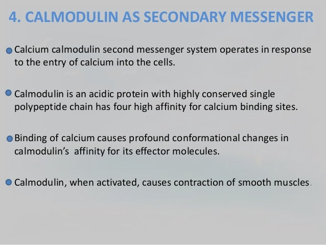 Mechanism Of Hormone Action  Role Of Secondary Messengers