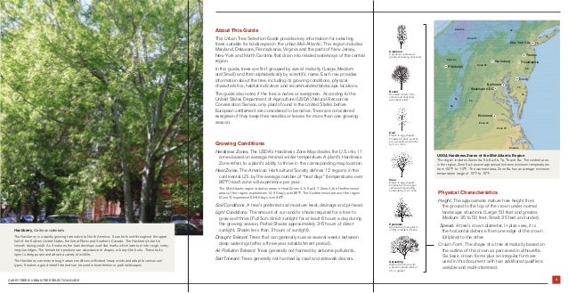 Casey Trees Urban Tree Selection Guide Slide 3
