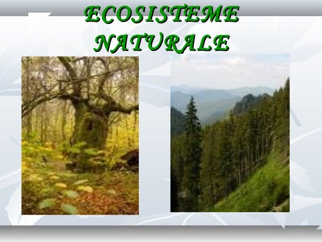 0 ecosistemul cls_viii (1)