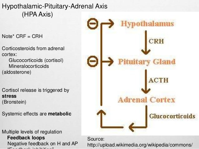 adrenal corticosteroid definition