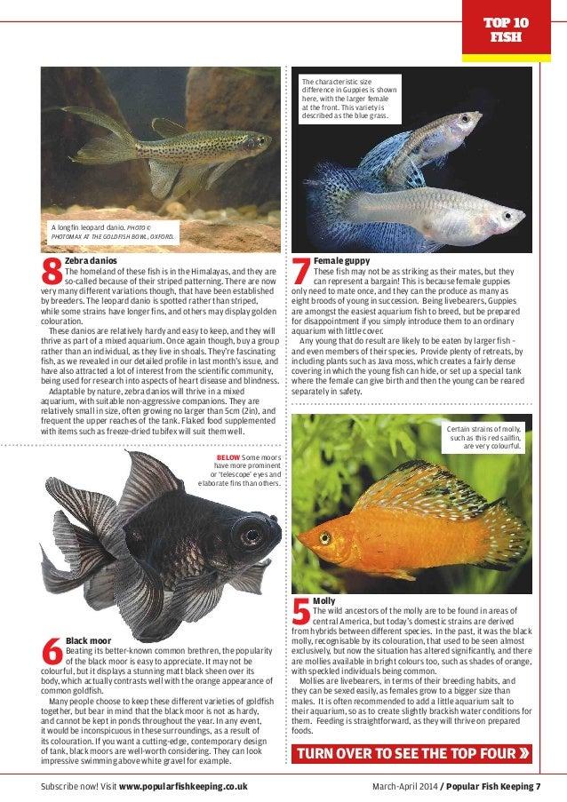 Popular Fish Keeping No 5