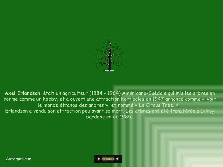 Automatique Axel Erlandson   était un agriculteur (1884 - 1964) Américano-Suédois qui mis les arbres en forme comme un hob...