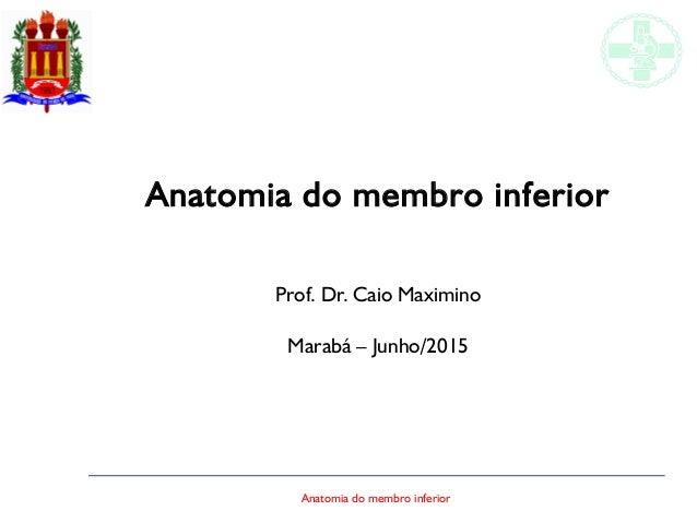 Anatomia do membro inferior Anatomia do membro inferior Prof. Dr. Caio Maximino Marabá – Junho/2015