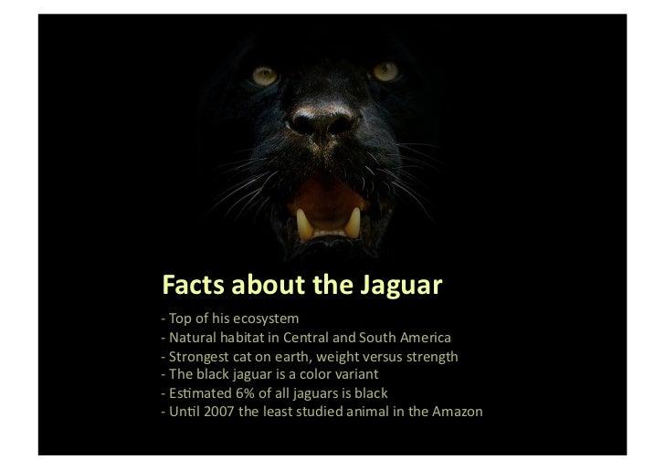 black jaguar foundation participate to preserve your planet