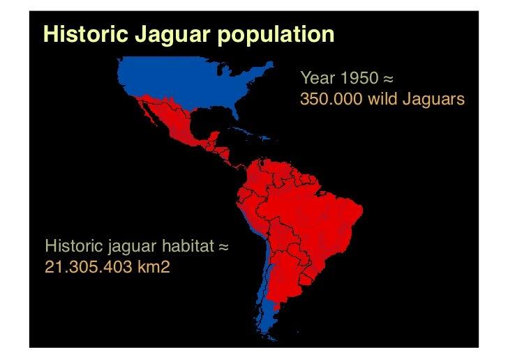 black jaguar foundation participate to preserve your planet. Black Bedroom Furniture Sets. Home Design Ideas
