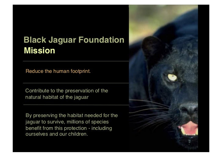 Black Jaguar Foundation!