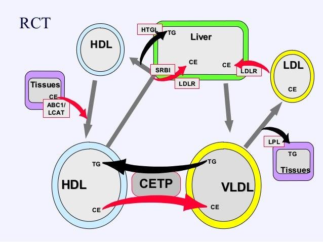HDLHDL CETPCETPHDLHDL VLDLVLDL TGTG TGTG CECE CECE LDLLDL CECE LiverLiver TGTG CECE HTGLHTGL TissuesTissues TGTG LPLLPL LD...