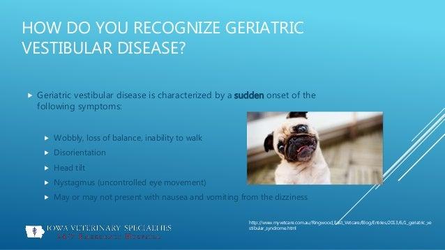 vestibular disease of geriatric dogs