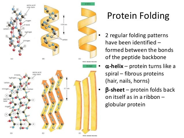 how the structure of proteins is Without proteins, living things would not exist proteins are involved in every aspect of every living thing many proteins provide structure to cells others bind to.