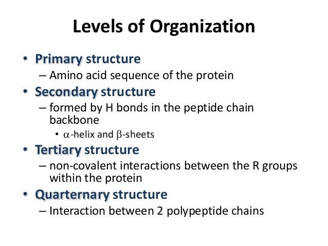 protein structure and function In the same way that amino acid sequence determines a protein's structure, the  structure of a protein plays a huge role in that protein's function for example.