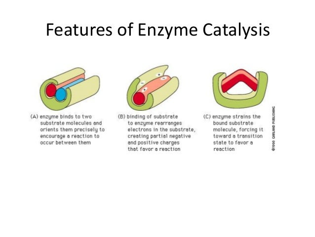 enzyme structure and functions Chapter 3: enzymes: structure and function enzymes act as the body'scatalysts bycomplexing thereaction'sparticipants in the correct arrangement to react, lowering the activation energy, e.