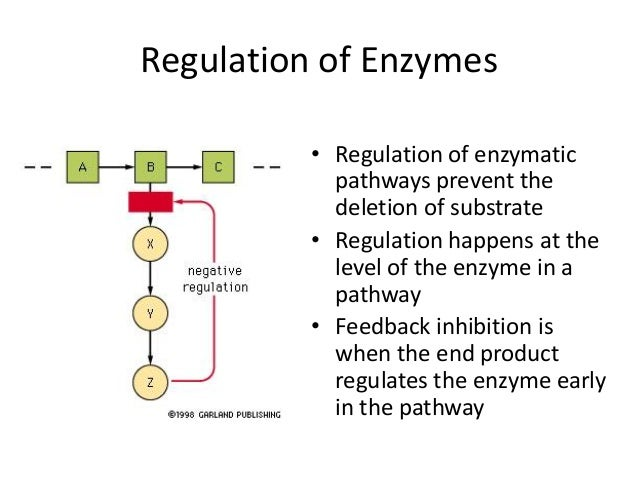 enzyme structure and function essay Enzymes are proteins that facilitate biochemical reactions, for example,  dna- associated proteins regulate chromosome structure during cell division   hormone proteins co-ordinate bodily functions, for example, insulin.