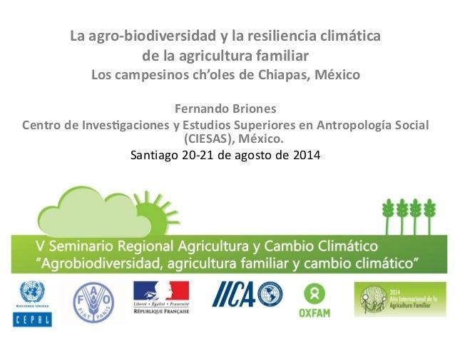 La agro-biodiversidad y la resiliencia climática  de la agricultura familiar  Los campesinos ch'oles de Chiapas, México  ...