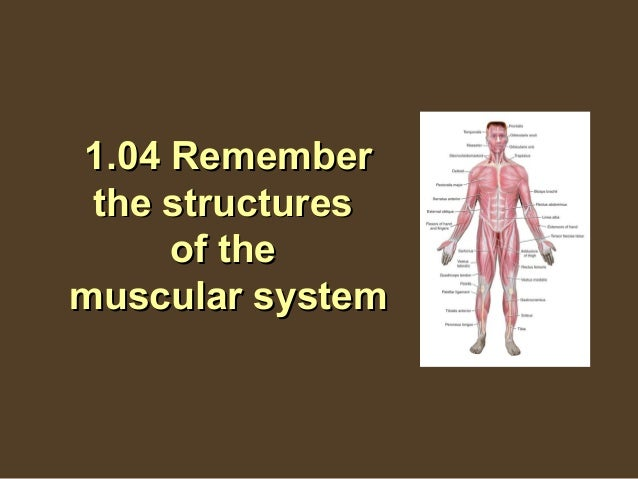 1.04 Remember the structures     of themuscular system