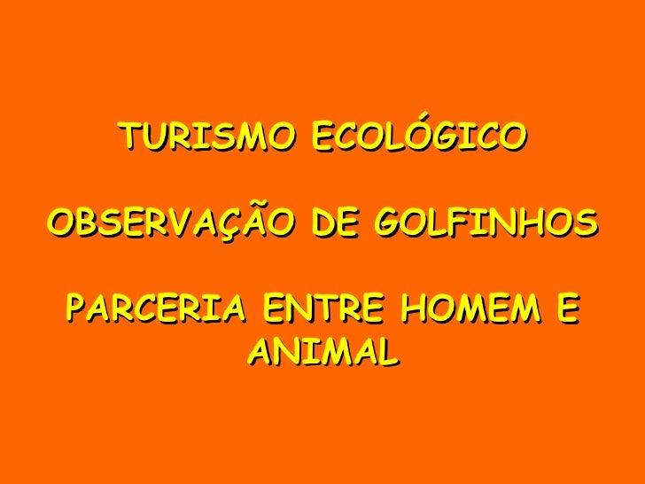 TURISMO ECOLÓGICO OBSERVAÇÃO DE GOLFINHOS PARCERIA ENTRE HOMEM E ANIMAL