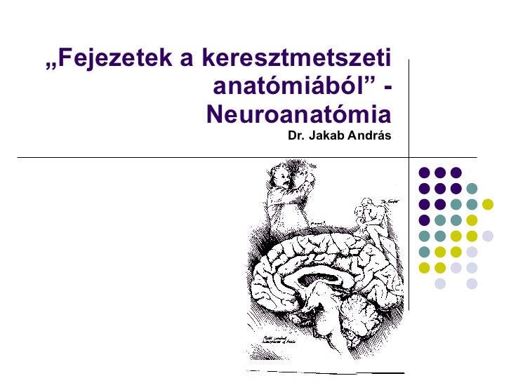 """"""" Fejezetek a keresztmetszeti anatómiából"""" - Neuroanatómia  Dr. Jakab András"""