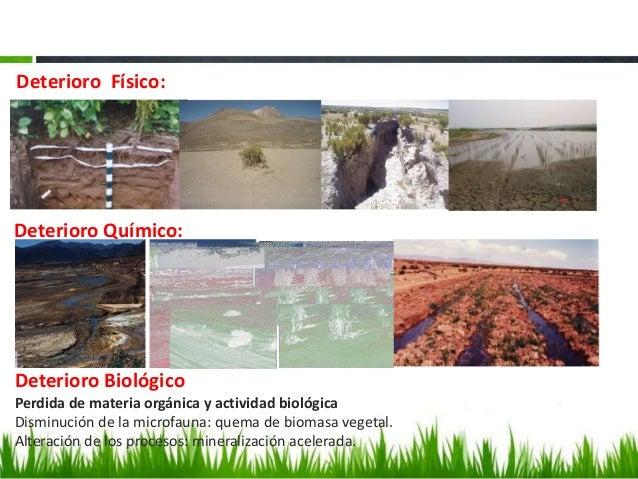 Estado prioridades y necesidades para el manejo for Componentes quimicos del suelo