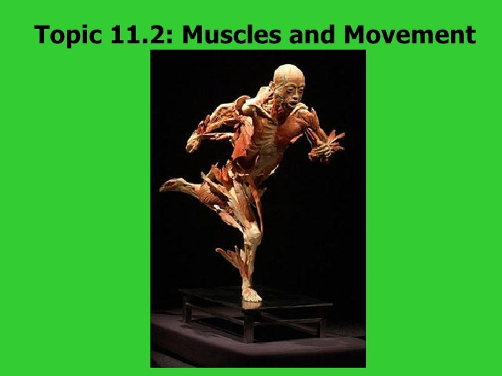 Topic 11.2: Muscles and Movement