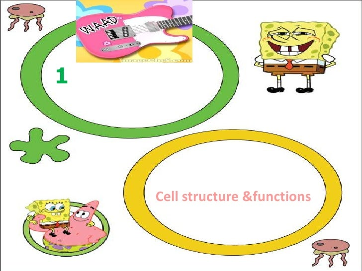 1    Cell structure &functions