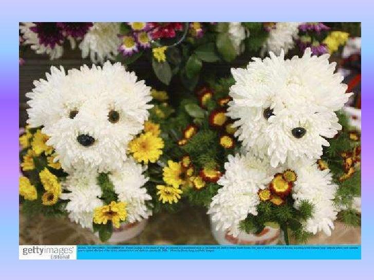animales de flor