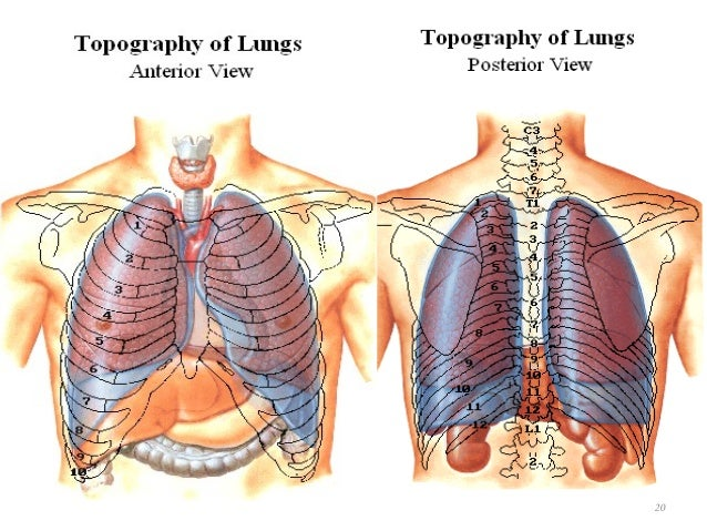 Thorax Overview