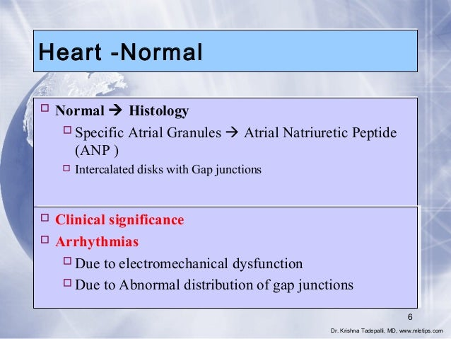 Heart -Normal  Normal  Histology  Specific Atrial Granules  Atrial Natriuretic Peptide (ANP )  Intercalated disks wit...