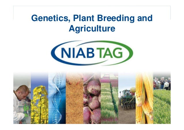 Dr Tina Barsby  Plant Science into Practice  Genetics, Plant Breeding and Agriculture
