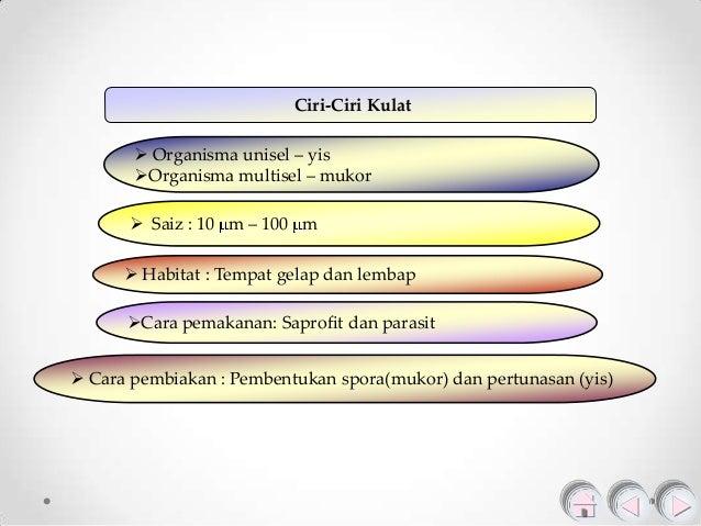 1.1 jenis mikroorganisma