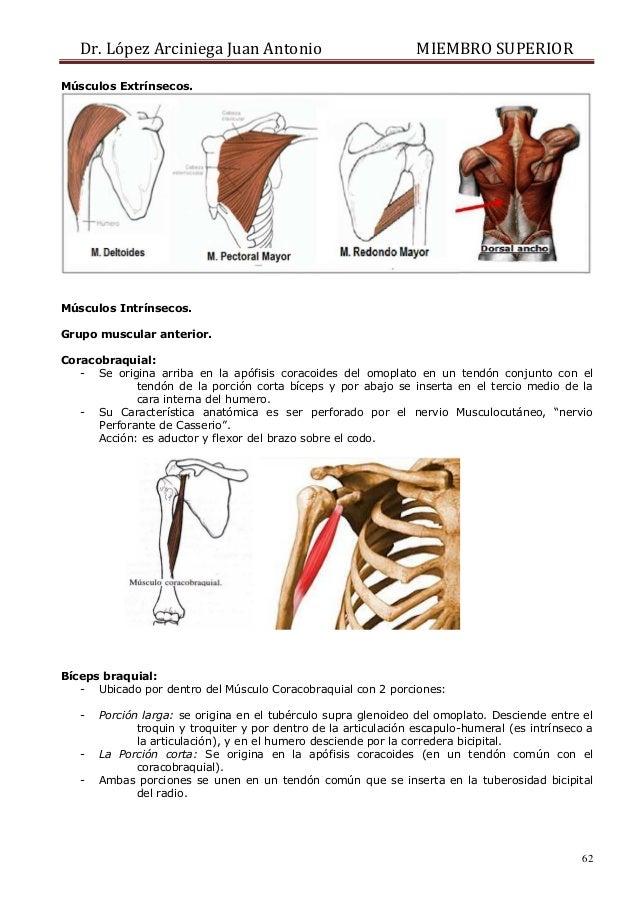 Encantador Tendón Conjunto Anatomía Del Hombro Ideas - Anatomía de ...