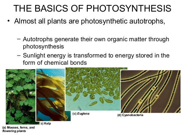 • Almost all plants are photosynthetic autotrophs, – Autotrophs generate their own organic matter through photosynthesis –...