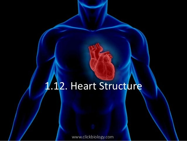 www.clickbiology.comwww.clickbiology.com 1.12. Heart Structure