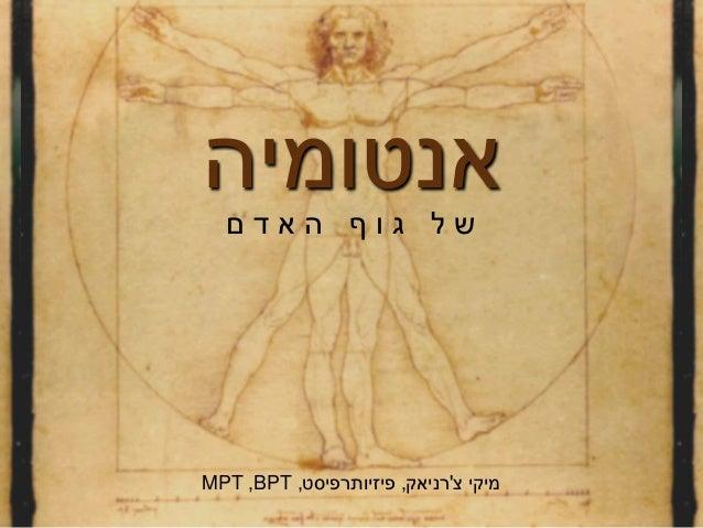 אנטומיהם ד א ה ף ו ג ל ש צ מיקי'רניאק,פיזיותרפיסט,BPT,MPT