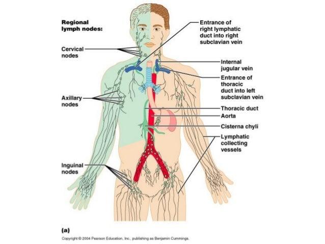 1 Lymphatic System