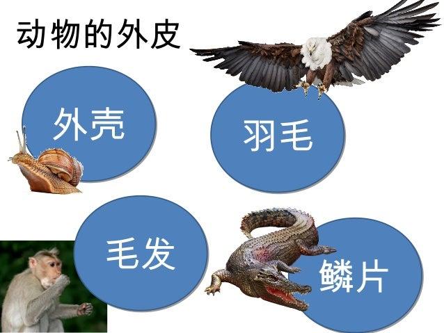 第三课动物(1) Slide 3