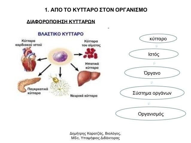 1. ΑΠΟ ΤΟ ΚΥΤΤΑΡΟ ΣΤΟΝ ΟΡΓΑΝΙΣΜΟ  ΔΙΑΦΟΡΟΠΟΙΗΣΗ ΚΥΤΤΑΡΩΝ  κύτταρο  Ιστός  Όργανο  Σύστημα οργάνων  Οργανισμός  Δημήτρης Κα...