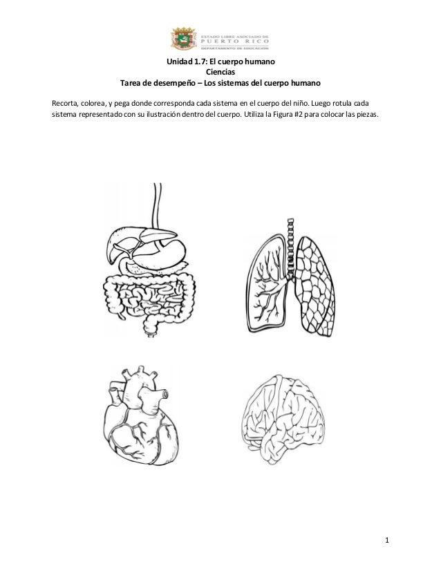 1.7 tarea de desempeño los sistemas del cuerpo humano
