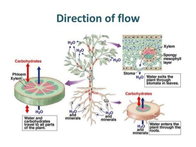 Biology Form 5 Chapter 1 : 1.7- 1.8 transport in plants