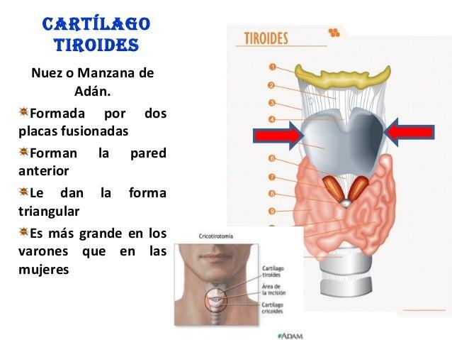 Los preparados para el tratamiento de la psoriasis de los codos