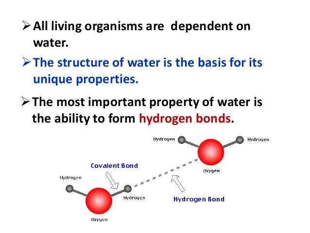 properties of water biology military bralicious co