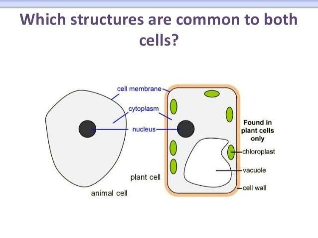 biology form chapter part cell structure 14