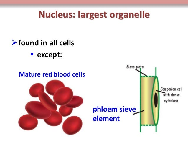 BIOLOGY FORM 4 CHAPTER 2 PART 1 - CELL STRUCTURE