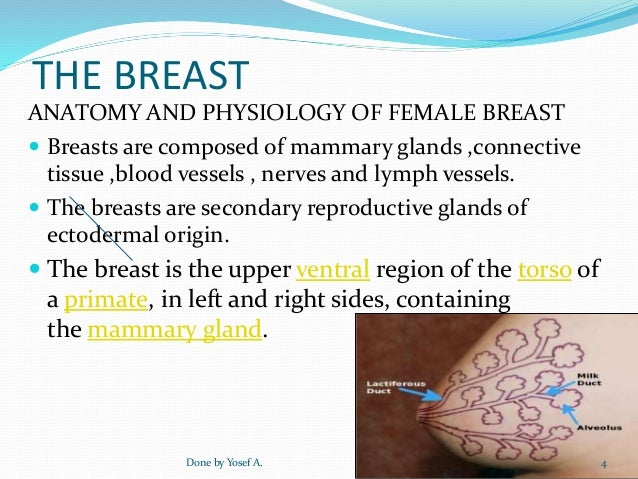 anatomy and physiology of the breast Anatomy of the lactating human breast redefined with ultrasound imaging  that impact on breast physiology, breastfeeding management and ultrasound assessment .