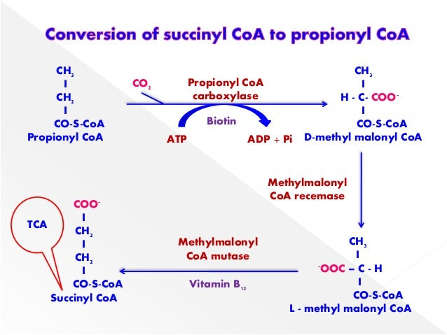 Fatty acid sythesis
