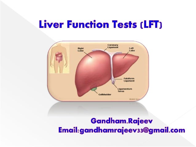  The liver is the largest organ in the body.  It is located below the diaphragm in the right upper quadrant of the abdom...