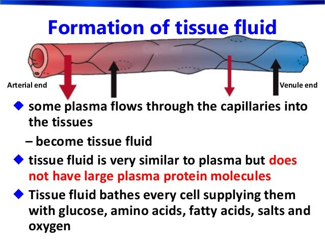the formation of the tissue fluid and exchange of materials in the capillary network the blood disea An artery is an elastic blood vessel that transports blood which may cause tissue death arterial disease may result in what is capillary fluid exchange.