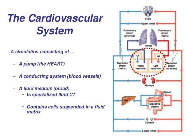 The Cardiovascular System A circulation consisting of … – A pump (the HEART) – A conducting system (blood vessels) – A flu...