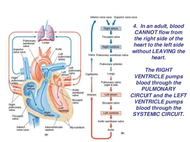 Blood flow chart dolapgnetband blood flow chart ccuart Gallery