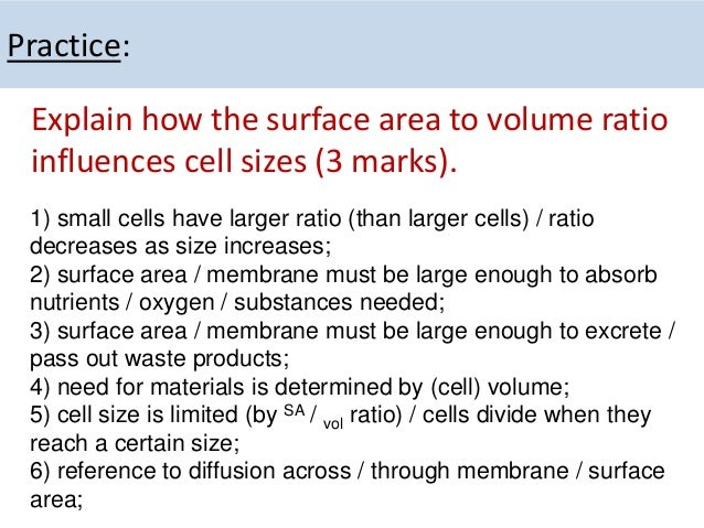 the relationship between surface area and volume of a cell