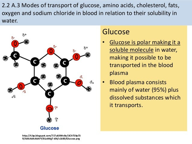 Galactose Structure Diagram IB Biology Topic Two B...