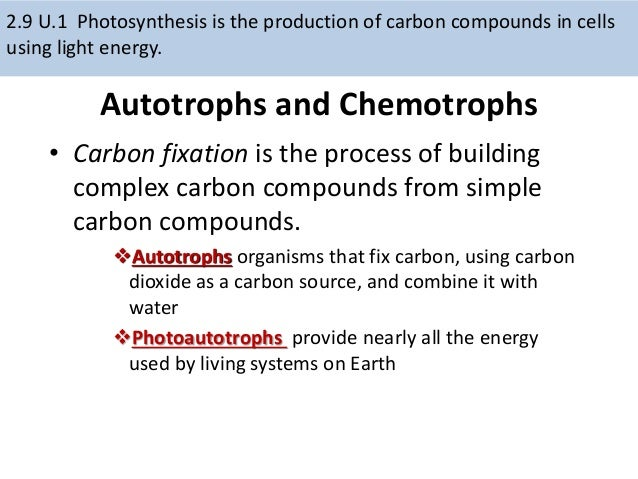 biology lab report on the effects of photosynthesis essay Read this essay on biology lab report come browse our large digital warehouse of free sample essays get the knowledge you need.